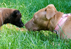 Hope, another rescue dog (right), introduces herself to a new puppy.